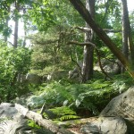 La SSVP de la Seine-et-Marne lutte contre la solitude